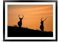 Stag silhouettes, Framed Mounted Print