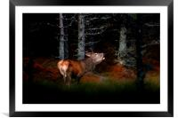Roaring stag, Framed Mounted Print
