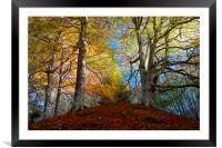 Reelig Forest, Framed Mounted Print