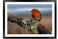 Robin, Framed Mounted Print