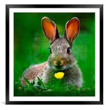 Baby Rabbit, Framed Mounted Print