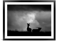 The Red Deer Rut, Framed Mounted Print