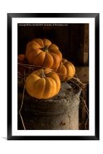 Three Pumpkins on a Bucket, Framed Mounted Print