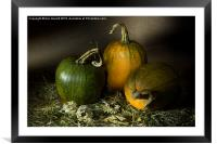 Three Pumpkins and Dried Daisies, Framed Mounted Print
