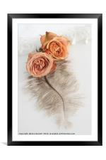 Two Old English Roses and Feather, Framed Mounted Print