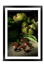 Autumn Chestnuts, Framed Mounted Print