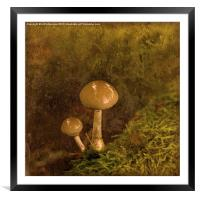 Just the Two of Us .., Framed Mounted Print