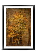 Golden Birch, Framed Mounted Print