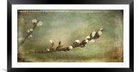 The Willow Branch, Framed Mounted Print