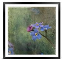 Forget-Me-Not, Framed Mounted Print