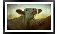 Moo In the Morning, Framed Mounted Print