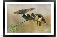 Sibling Rivalry, Framed Mounted Print