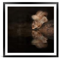 Red Squirrel Reflection, Framed Mounted Print