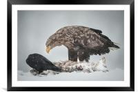 Eagle and Raven, Framed Mounted Print