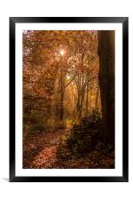 In to the Woods, Framed Mounted Print