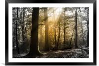 Step into the Light, Framed Mounted Print