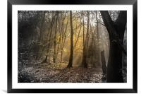 Autumn Light, Framed Mounted Print