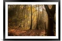 Autumn Mist, Framed Mounted Print