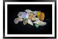 Sea Shells, Framed Mounted Print