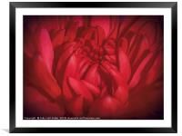 Richly Red, Framed Mounted Print