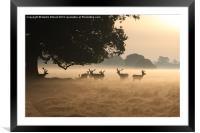 Sunrise in the Park, Framed Mounted Print