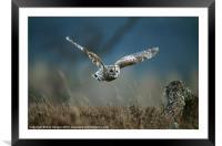 TAWNY OWL IN FLIGHT, Framed Mounted Print