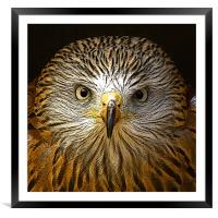 Red Kite Portrait with Texture, Framed Mounted Print