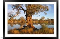River Murray reflections, Framed Mounted Print