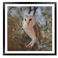 Barn Owl in the Bush, Framed Mounted Print