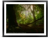 Blaise Woods, Framed Mounted Print