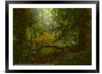 Forest Light, Framed Mounted Print