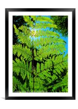 Fern Leaf, Framed Mounted Print