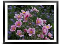Japanese Anemone, Framed Mounted Print