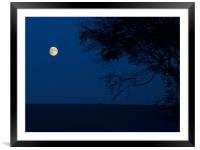 Moon and Beeches, Framed Mounted Print