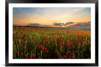 Poppy Fields, Framed Mounted Print