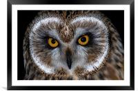 Short Eared Owl, Framed Mounted Print