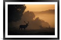 Red Deer Stag, Framed Mounted Print