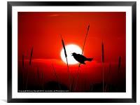 Lone Singing Blackbird, Framed Mounted Print