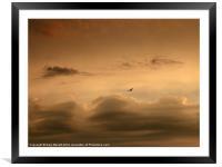 Lone Bird Menacing Sky, Framed Mounted Print