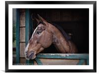A Horse Of Course - Retro, Framed Mounted Print