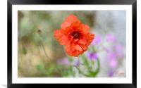Poppy, Framed Mounted Print