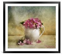 Hydrangea, Framed Mounted Print