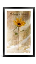 Pathway to the sun, Framed Mounted Print