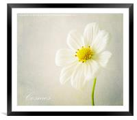 Cosmos, Framed Mounted Print