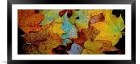 Fallen Autumn Leafs, Framed Mounted Print