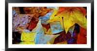 Fallen Autumn Leafs, Framed Mounted Print