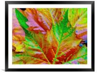 Bright Autumn Leafs, Framed Mounted Print