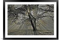 Autumn into Winter Sun Rays, Framed Mounted Print