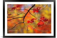 The Glory of Fall, Framed Mounted Print