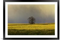 Stormy sky over rape field, Framed Mounted Print